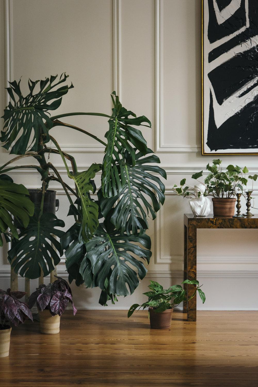 TINY_NEST_INTERIOR_PLANTS_NEW_ORLEANS-4.jpg