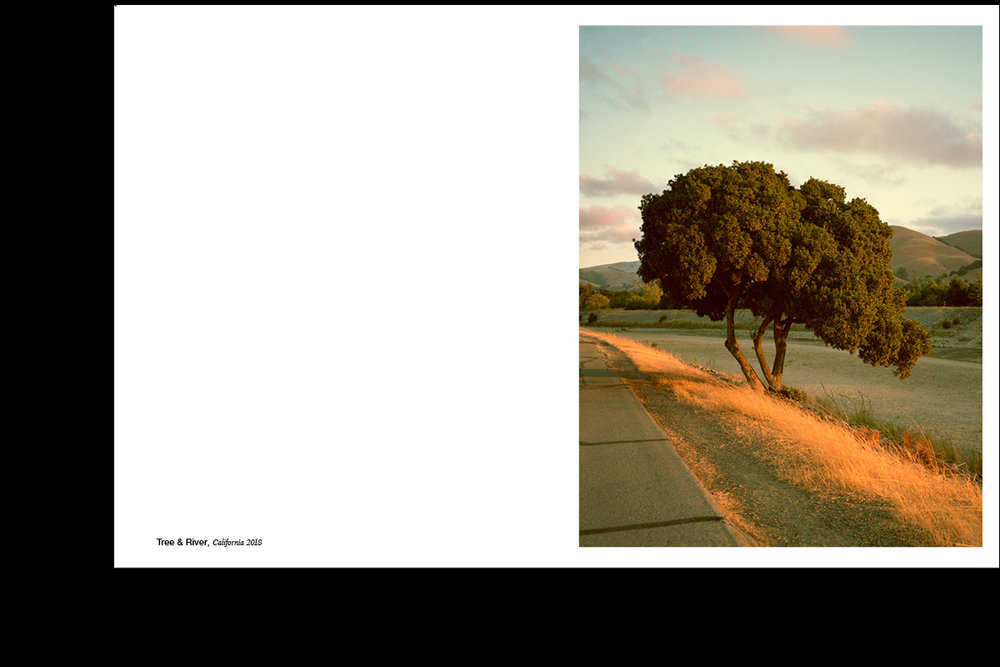 Indesign_Tree_River.jpg
