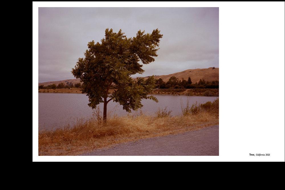 Indesign_Tree.jpg