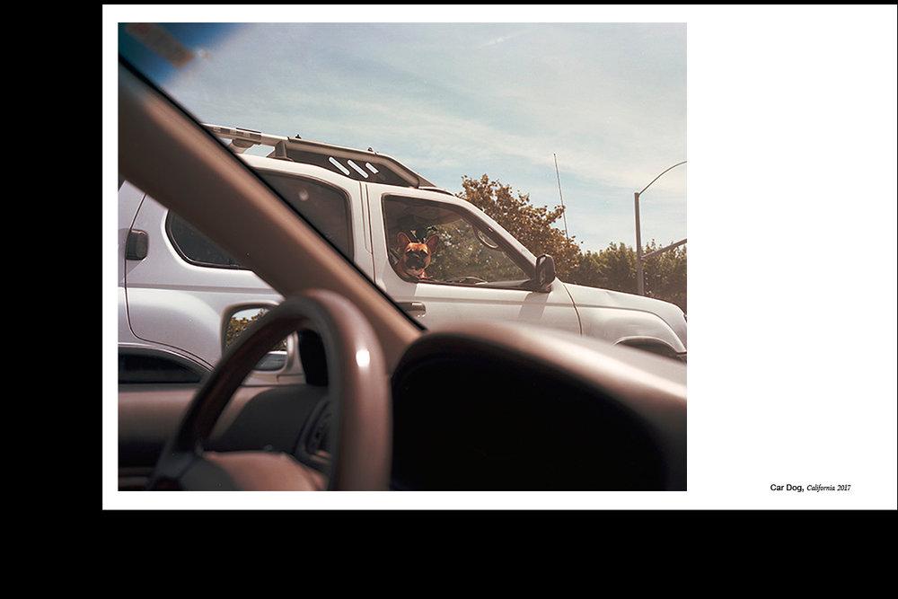 Indesign_Car_Dog.jpg