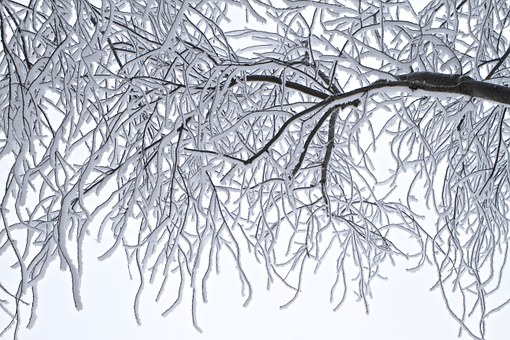 trees-772550__340.jpg