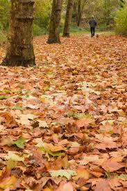 aut leafs.jpg