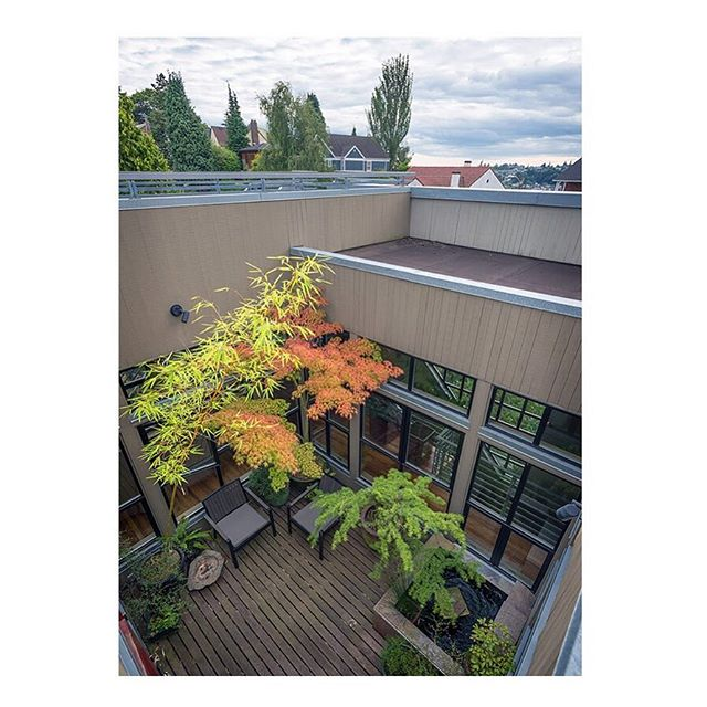 #Fallcolors spotted in the outdoor atrium of our Atrium House project.