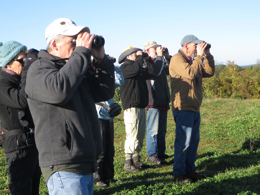 IMG_0612 focused birders.jpg