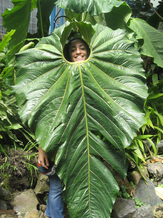student and leaf in amazon.jpg