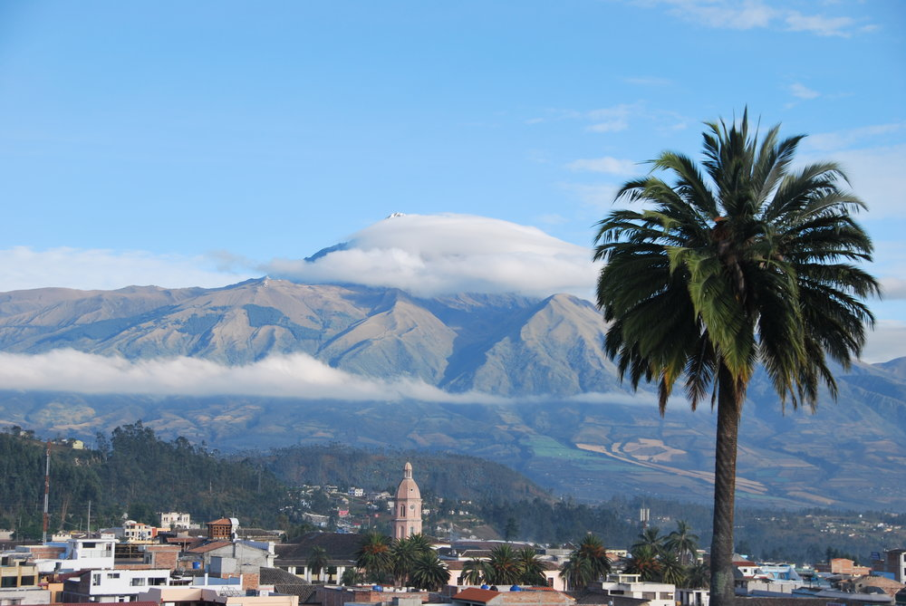 otavalo palm tree.jpg
