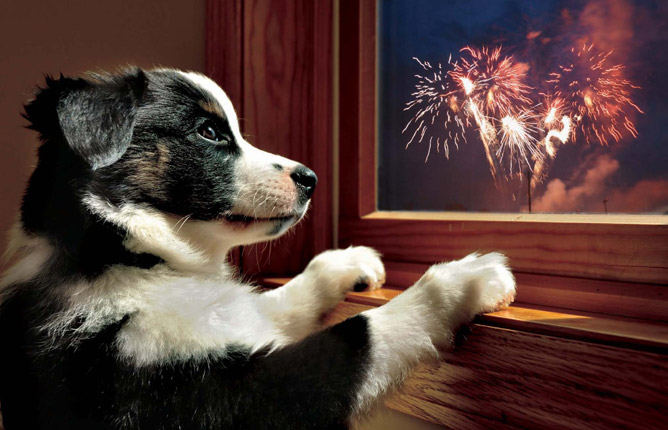 Dog Fireworks.jpg