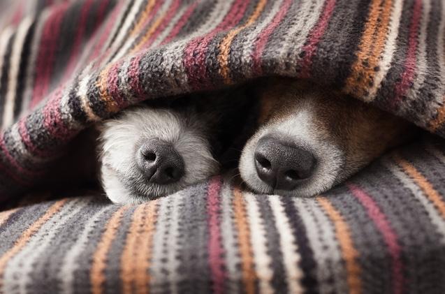 Dog Blanket.jpg