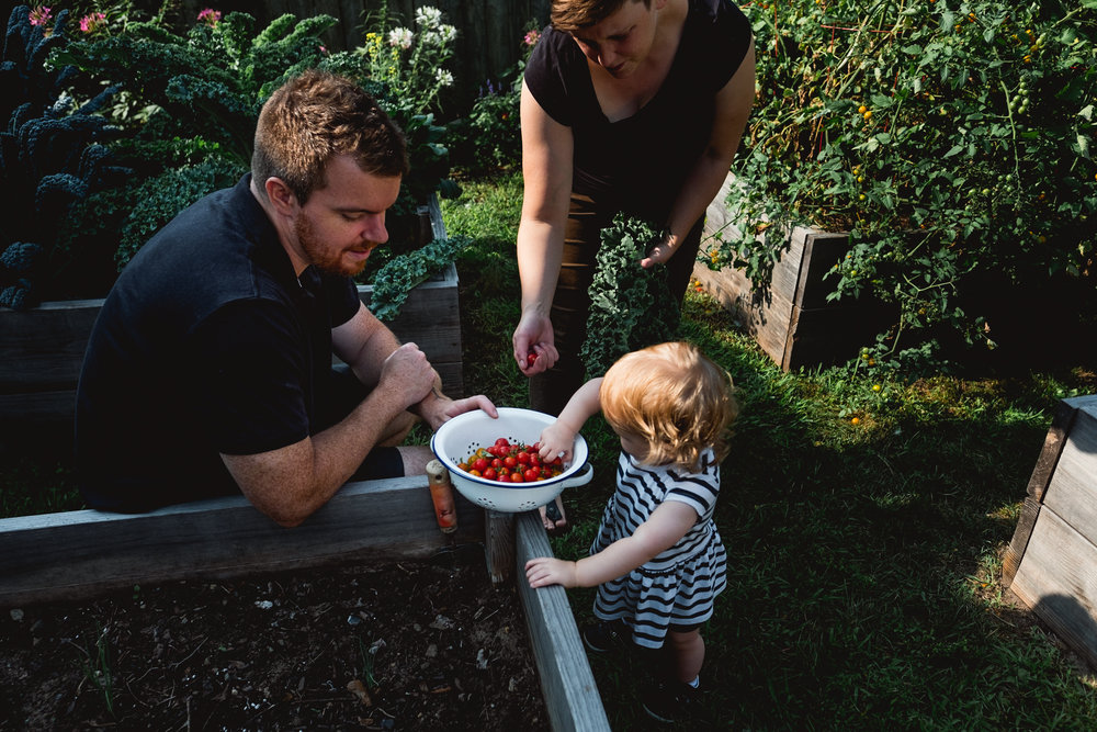 Picking tomatoes together. Detroit Family Photographer