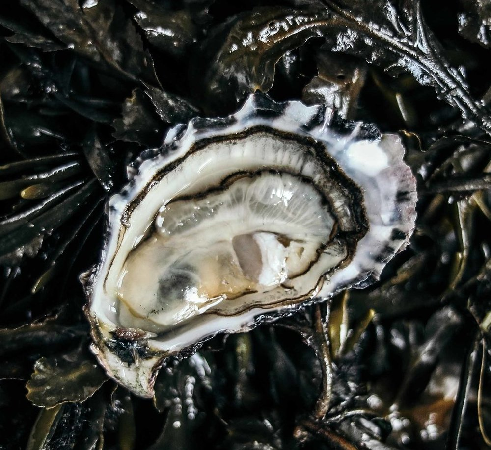 Porthllly Oysters