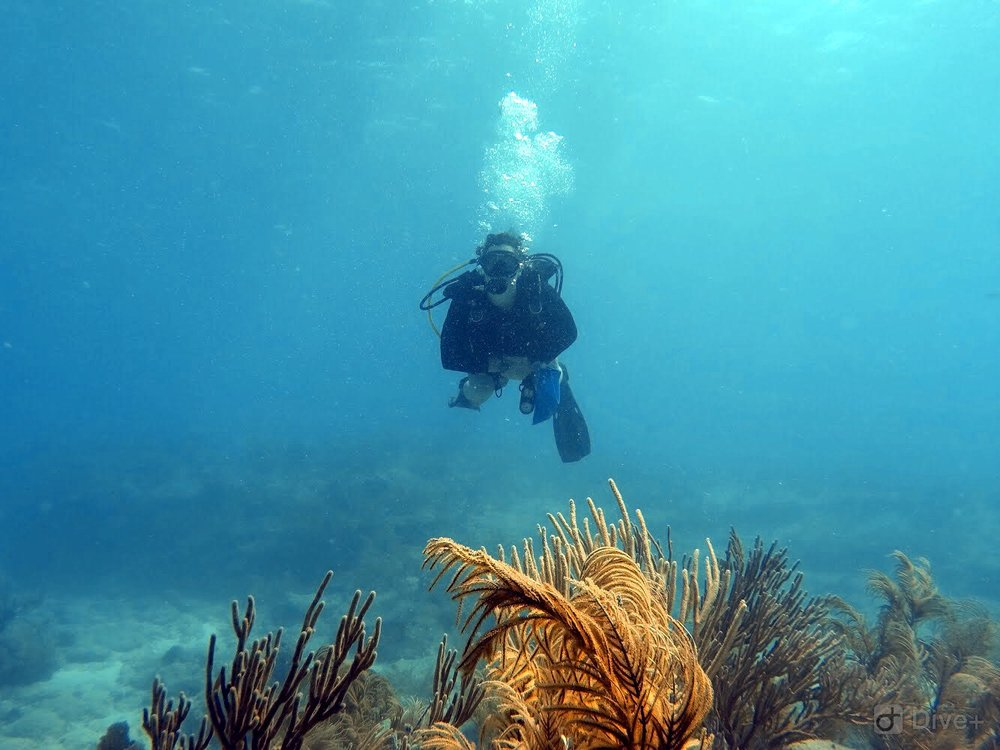 Diving on Looe Key