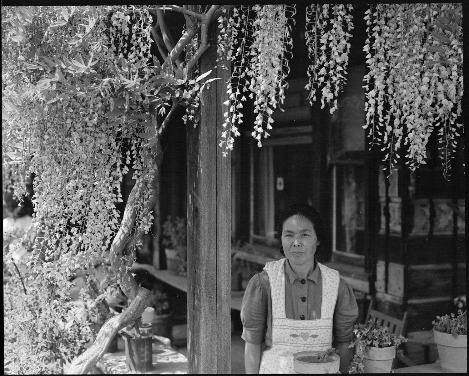 Mountain View, California. Mother of six children born in this country. Before evacuation, the family operated a 20-acre farm in Santa Clara County, raising berries, broccoli, peas, and garlic. Evacuees of Japanese ancestry will be housed in War Relocation Authority centers for the duration where they will be given opprtunities to continue farming and other callings.