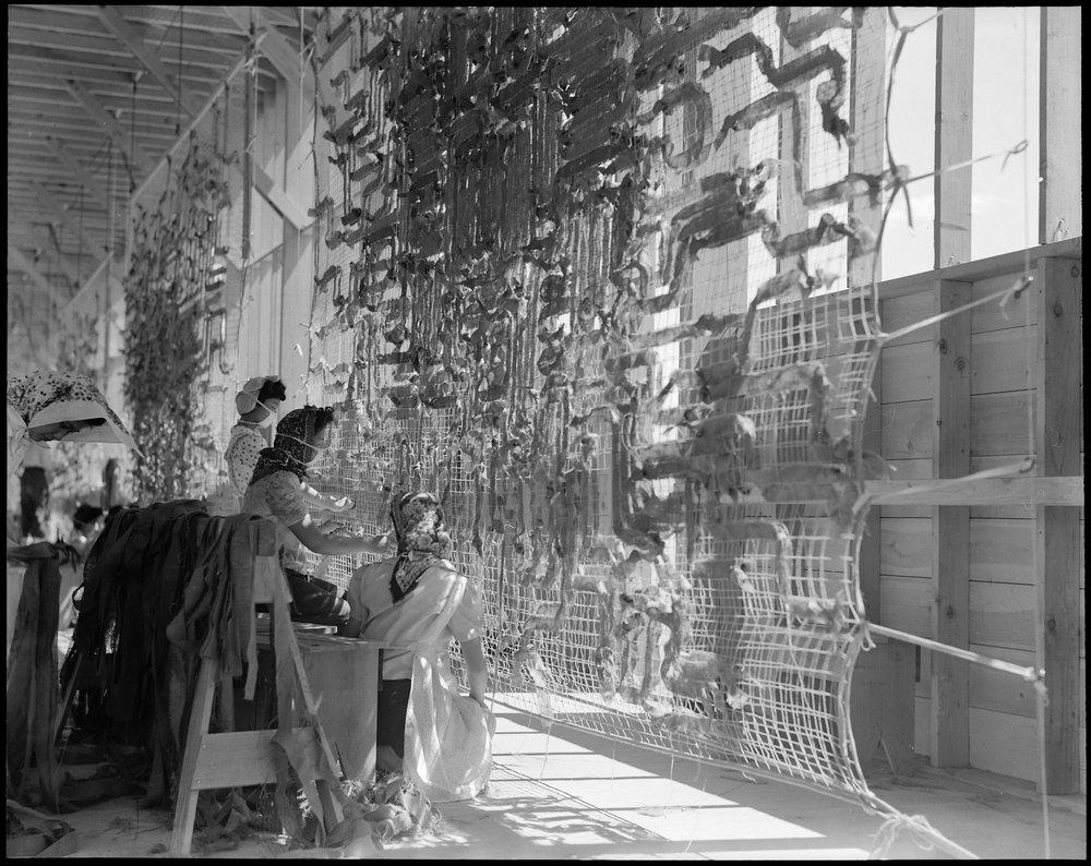 Manzanar Relocation Center, Manzanar, California. Making camouflage nets for the War Department. T . . .