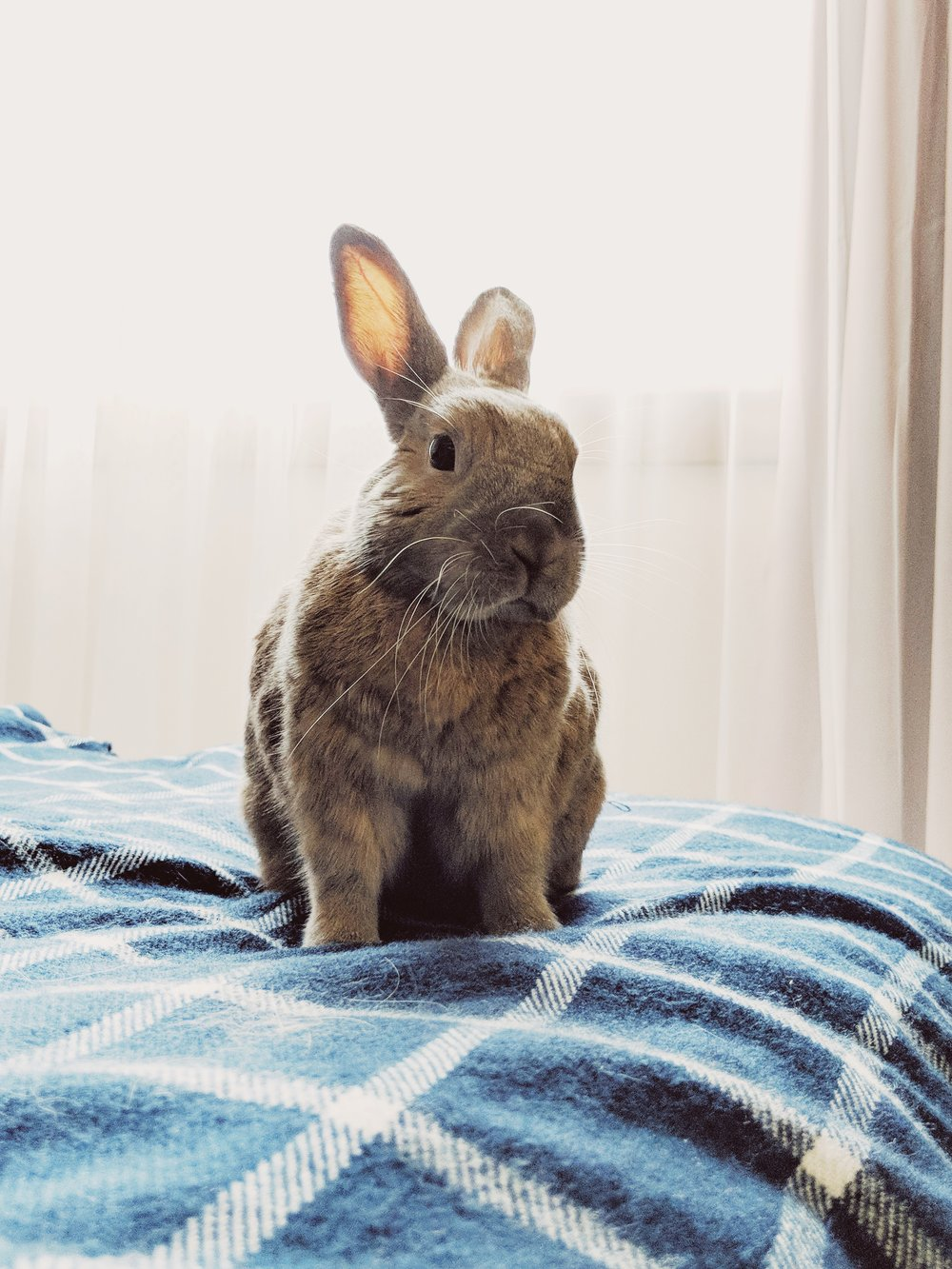 Our bunny Violet, adapting to our new place