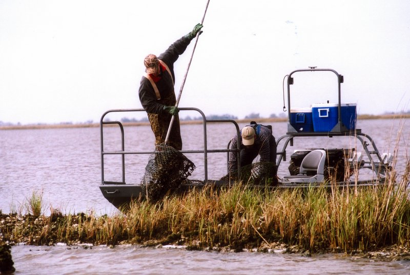 A Sea Grant College Program group from Louisiana State University pulls discarded crab traps from the water in Pointe aux Chenes.