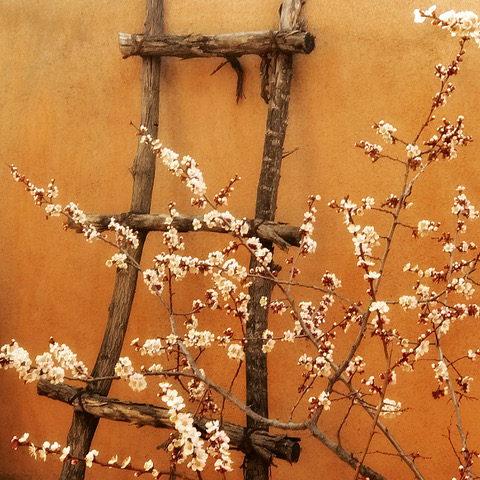 Pueblo Ladders and Apricot Blossoms, Lynda Atwood from Jozef Bakos House
