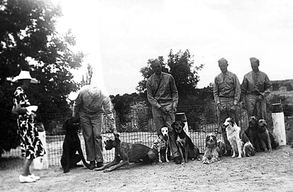 Dogs for Defense training at El Delirio, Santa Fe, August 1942. SAR AC20-11b, Courtesy of the School for Advanced Research.