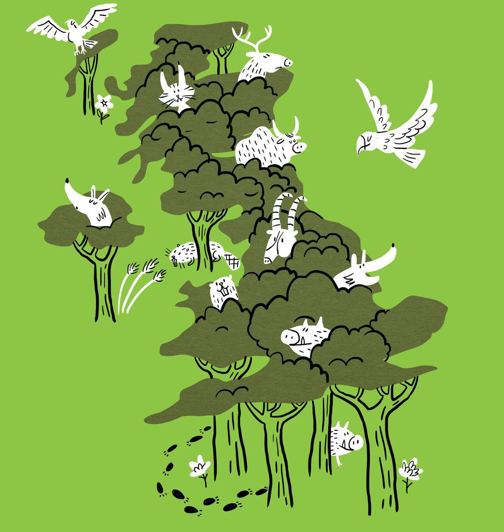 Scriberia illustration agency Rewilding Britain