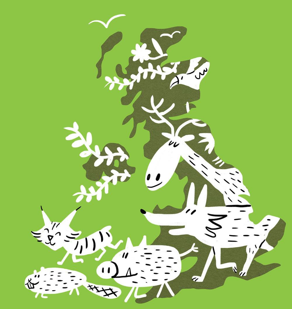 Scriberia illustration agency Rewilding Britain