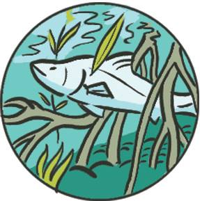 Illustrations for Frontier's mangrove conservation project | Scriberia