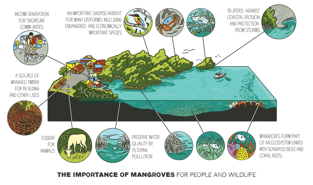 Scriberia illustration agency Frontier mangroves