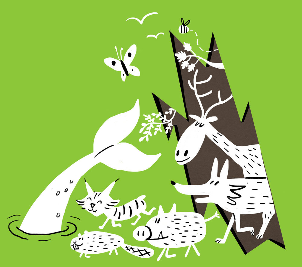 scriberia rewilding britain charity eco-system
