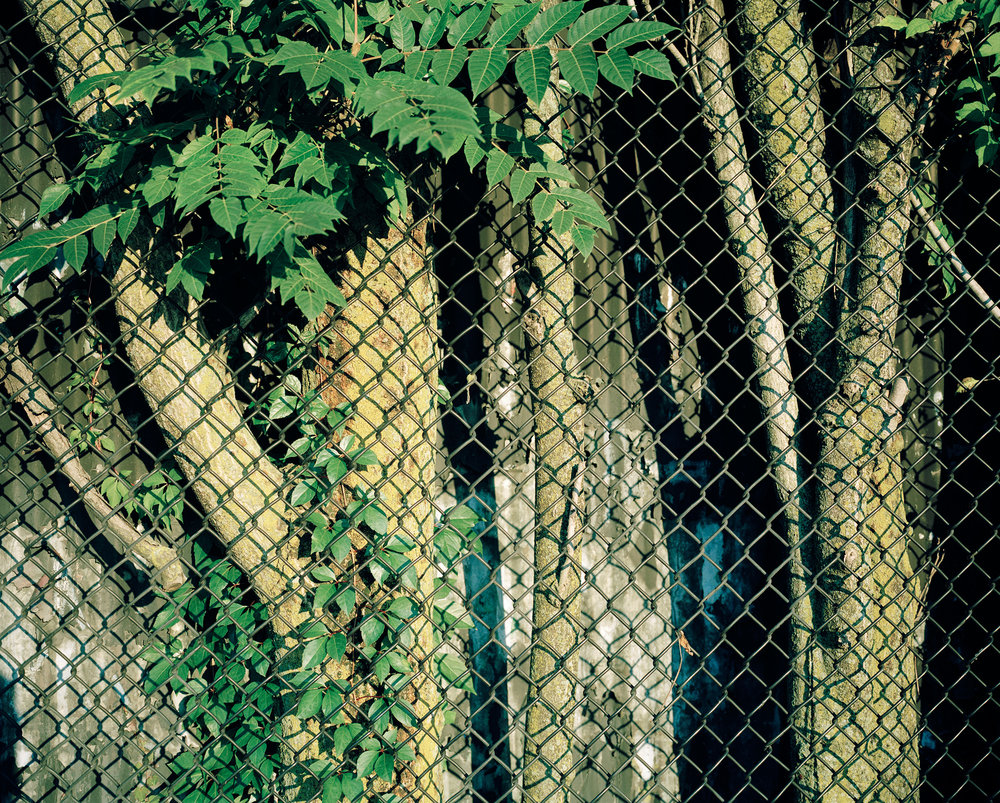 07_08tree_behind_fence.jpg