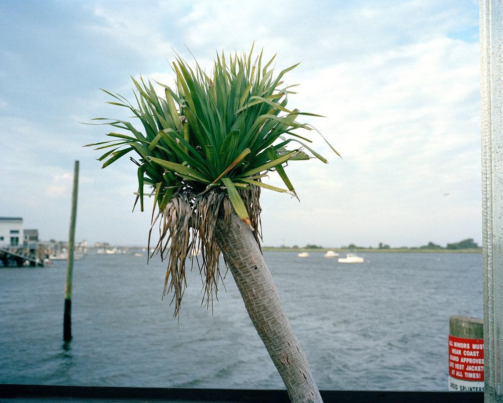 15_14_palm_tree.jpg
