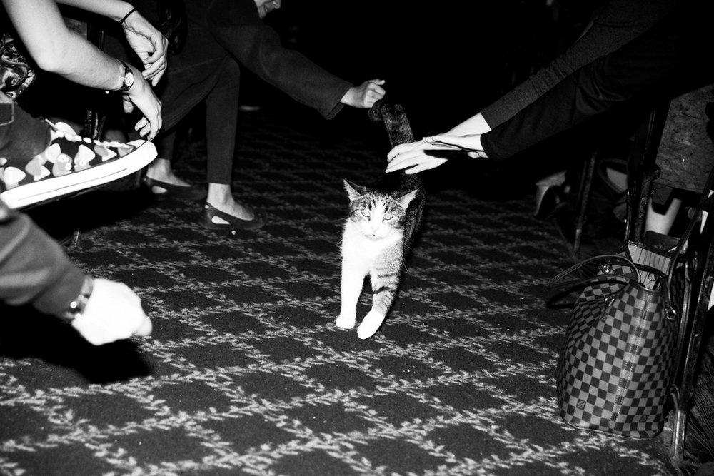 02_Cat_People-Julius-Motal-71.jpg