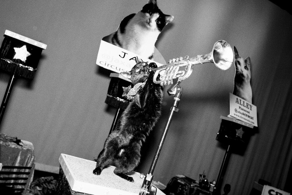 04_Cat_People-Julius-Motal-72.jpg
