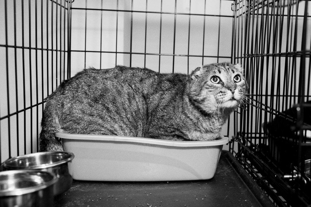 06_Cat_People-Julius-Motal-122.jpg