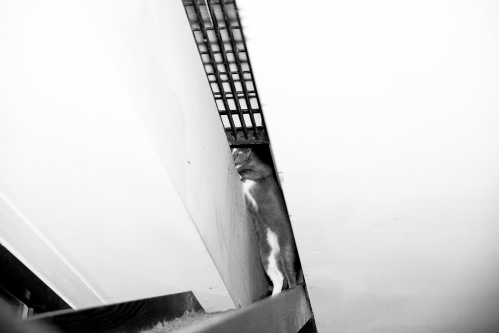 08_Cat_People-Julius-Motal-57.jpg