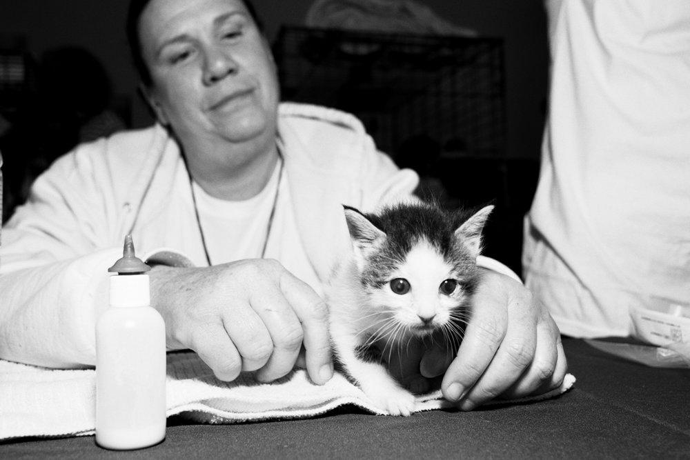12_Cat_People-Julius-Motal-113.jpg
