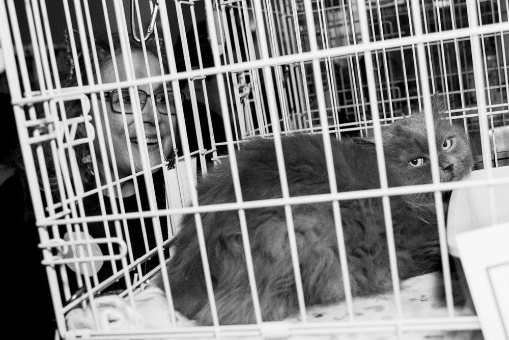 15_Cat_People-Julius-Motal-110.jpg