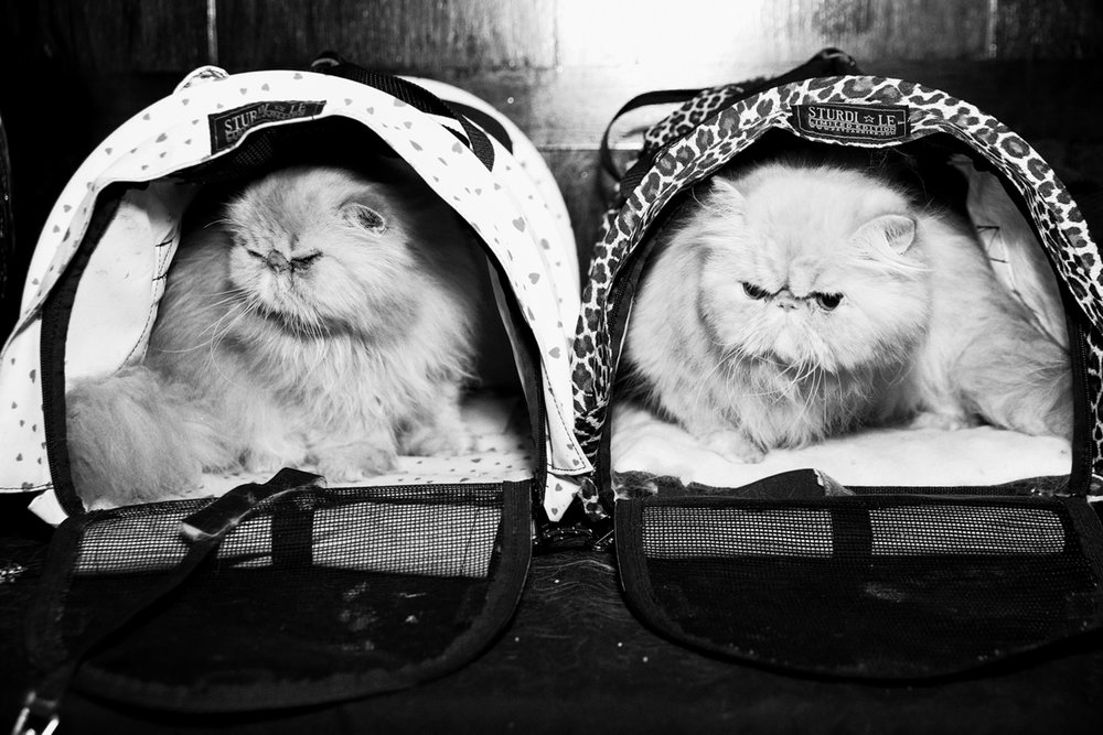 16_Cat_People-Julius-Motal-37.jpg