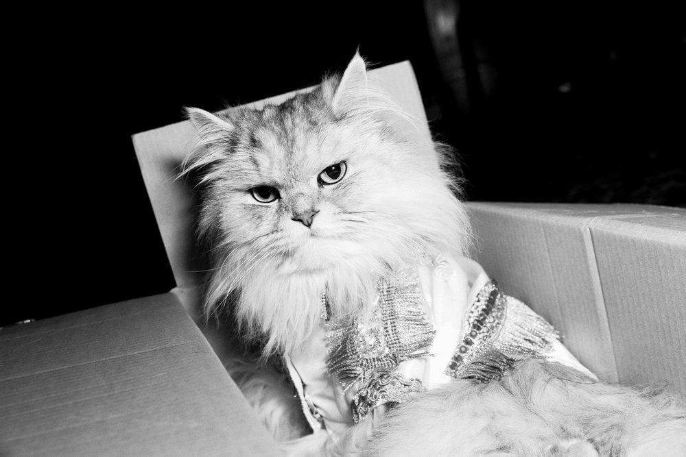 17_Cat_People-Julius-Motal-32.jpg