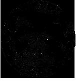 aap-logo-web-1.png