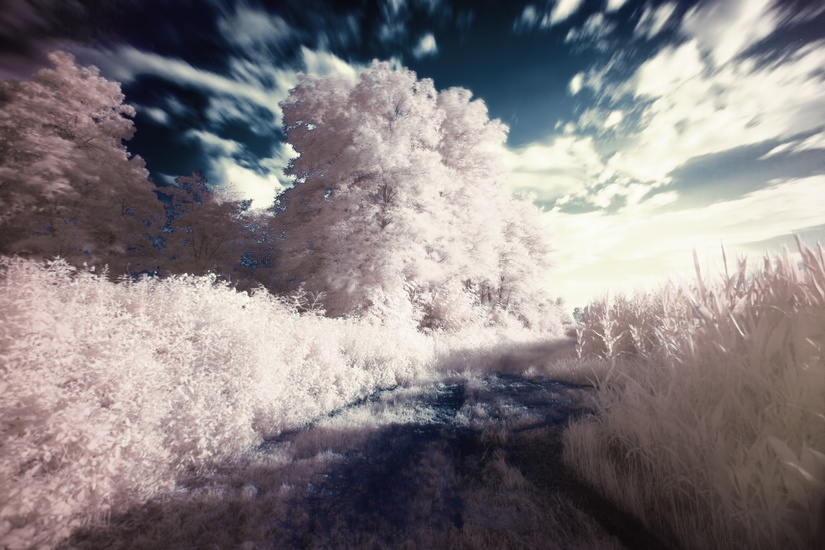 dream-filter-infrared-surreal-large