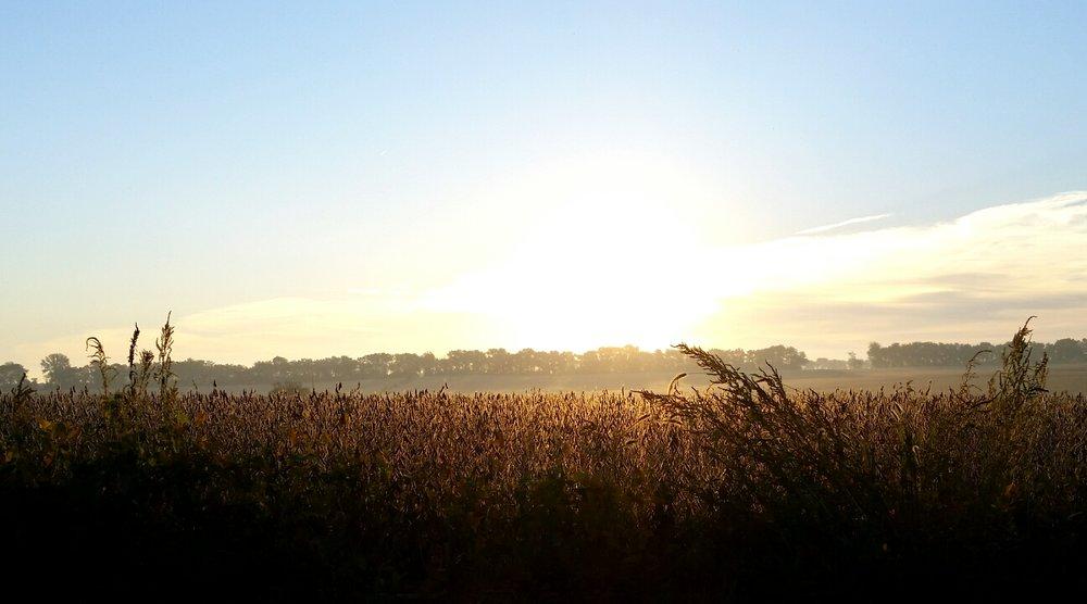 cornfieldsunset.jpg