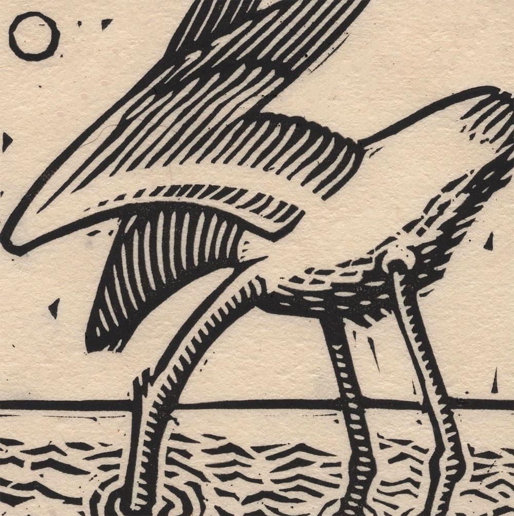egret detail 1.jpg