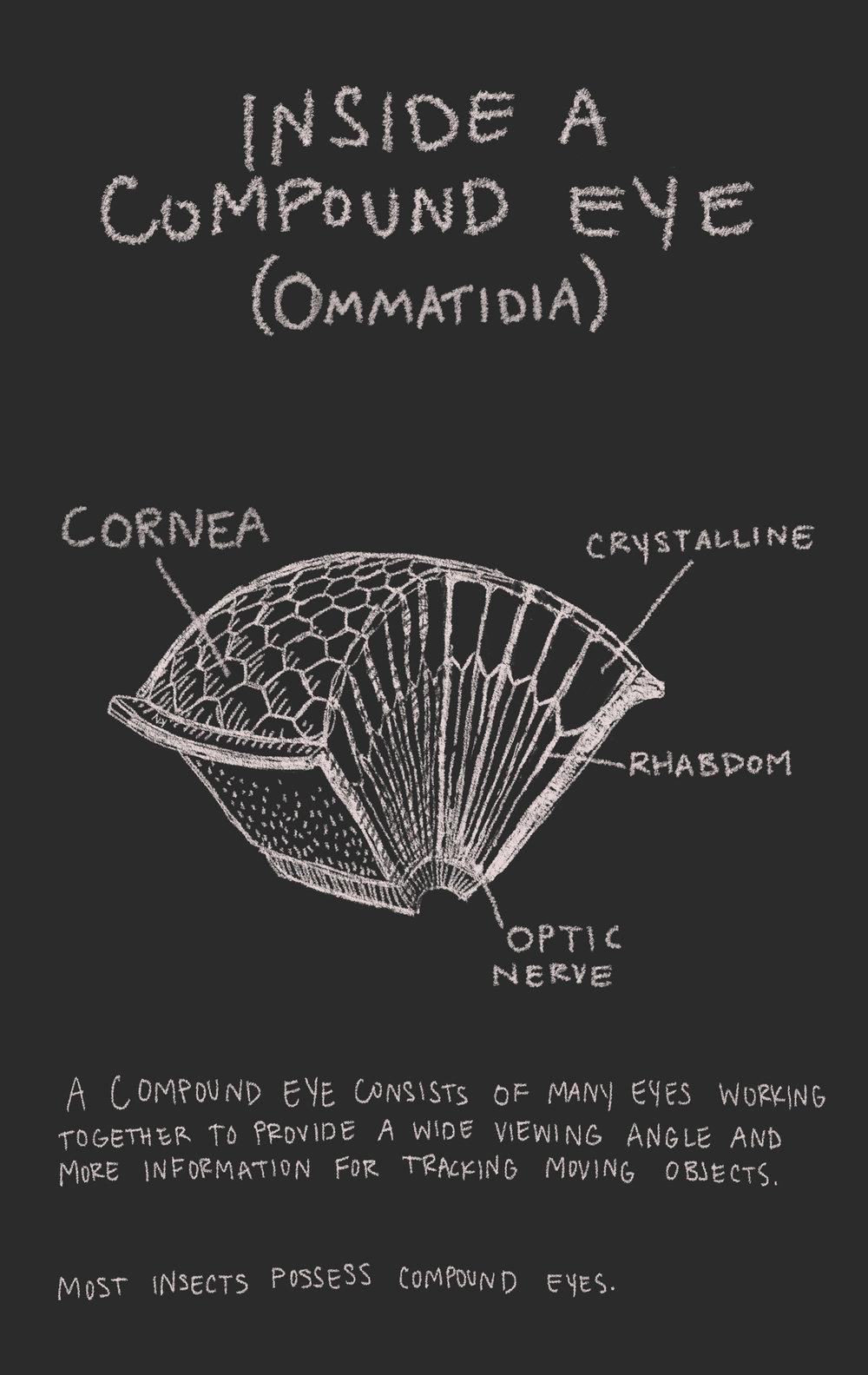 BB+compound+eye.jpg