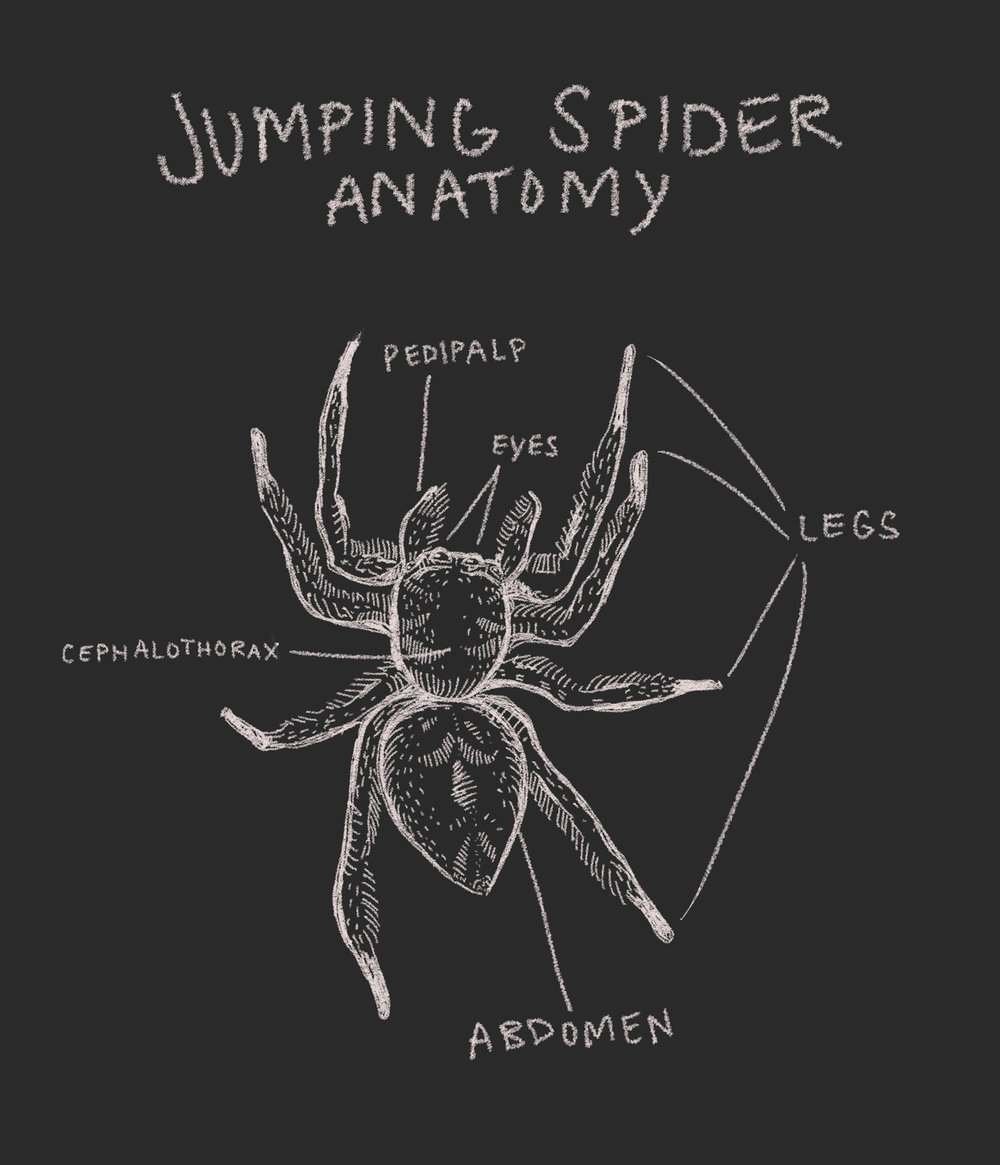 BB+j+spider+anatomy.jpg