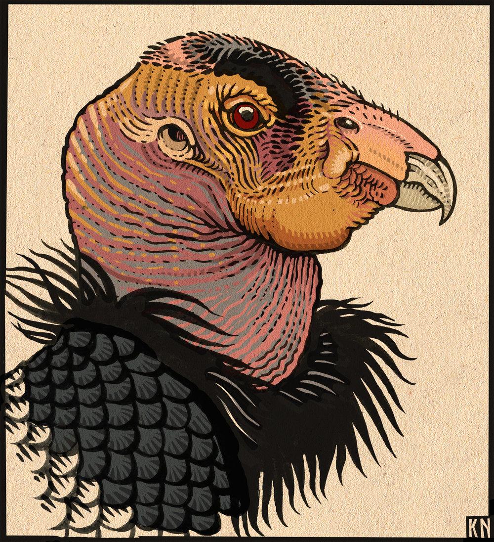 california condor.jpg