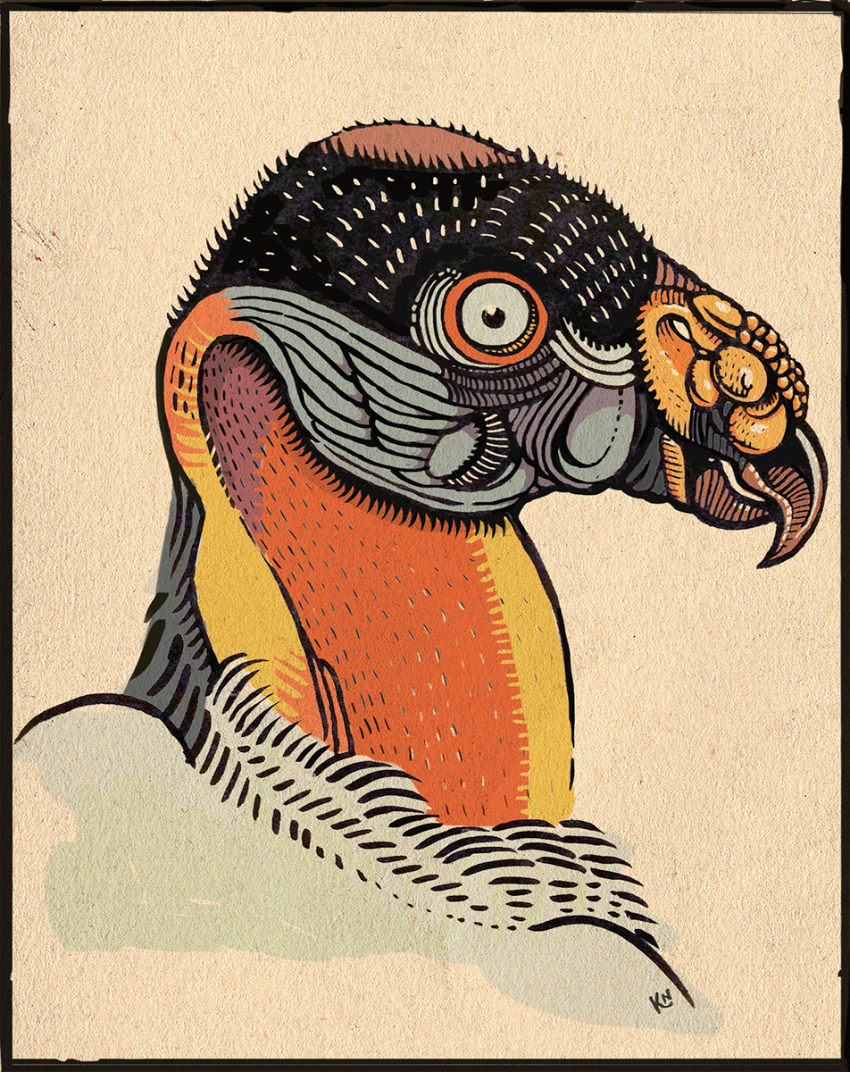 king vulture.jpg