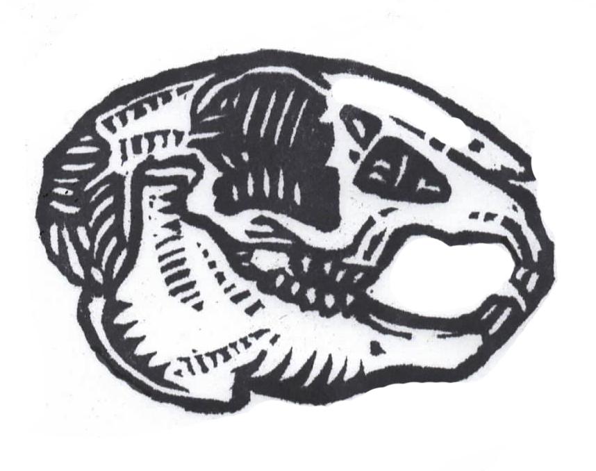 Hare skull