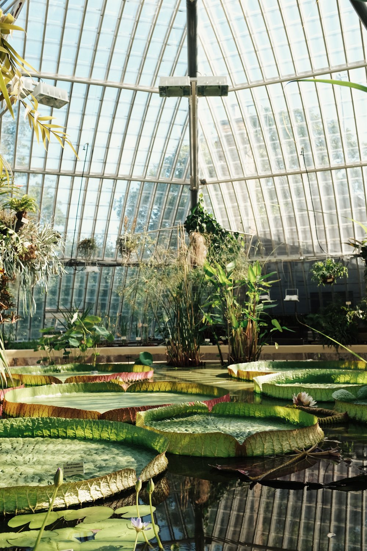 bergian garden