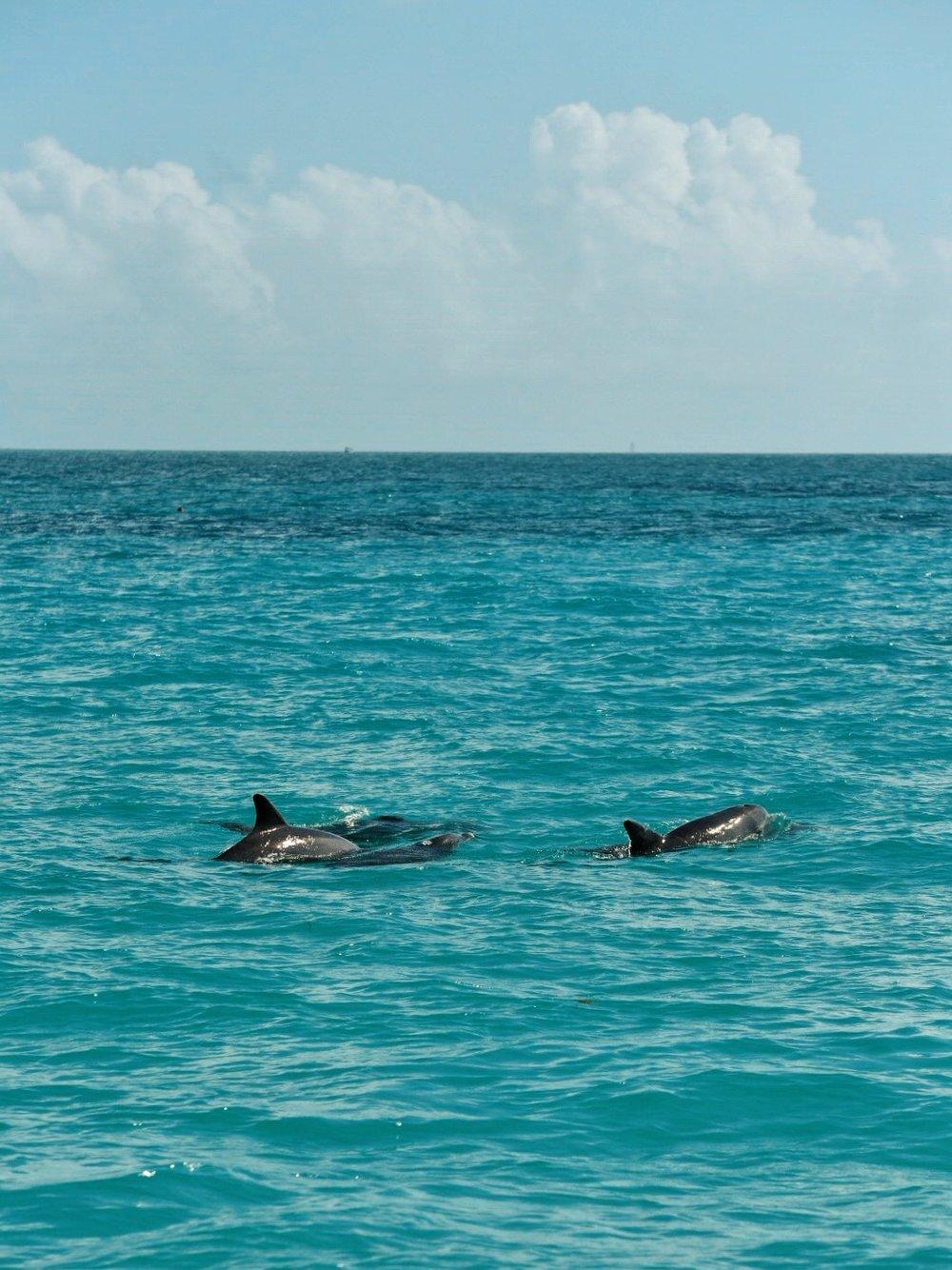 florida keys dolphins