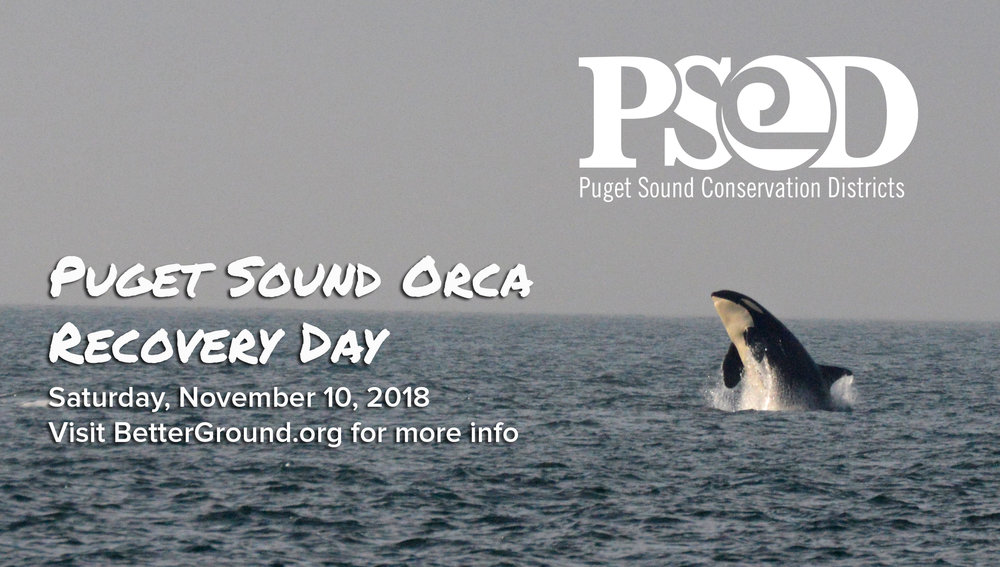 Orca Recovery Day Image.jpg