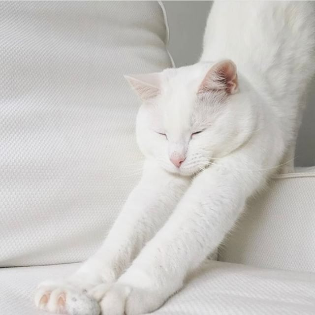 Actual face we make when we get out of bed. 😺#sleepwithettitude