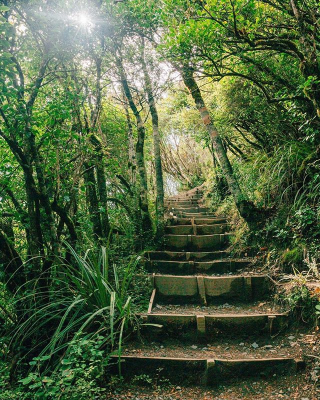 Stairway to nature heaven 😍 . . . #travelawesome #travelphotography #wildernessculture #travel_captures #optoutside #greenlife #traveling #newzealand #newzealandfinds #nztravel #standwithnz #wildlifeaddicts #wildernessvibes #greengoodness #visualsoflife #natgeoyourshot #natgeotravel #travelgram #wildlifephotography #capture_today #capturenz #wander #wanderlust #travelphotoblog #neverstopexploring #wandertheworld #travelawesome #stairwaytoheaven #intothewild #wildernesstones